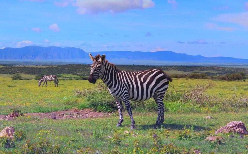 Viajes a Tanzania con Atrapalo